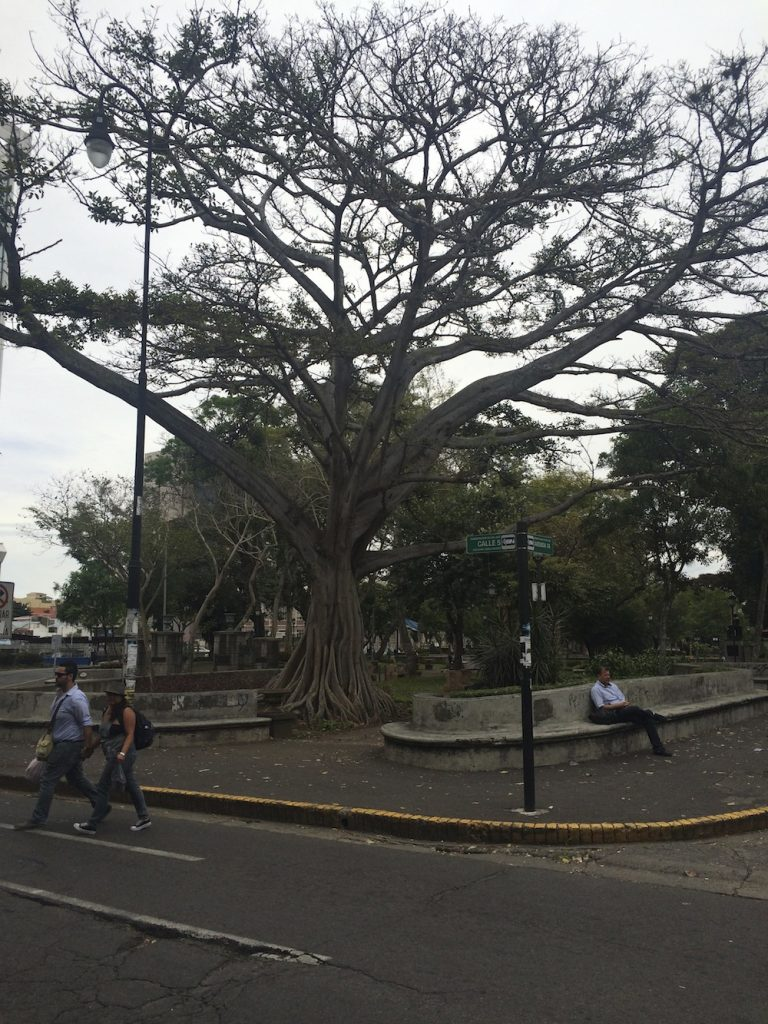 San Jose corner park